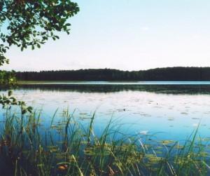 Bolmensee: Uferabschnitt