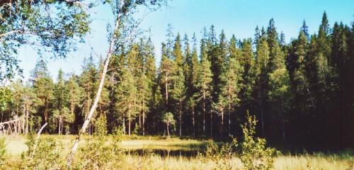 Vildmark in Schweden: Nationalpark Hamra & Orsa Finnmark