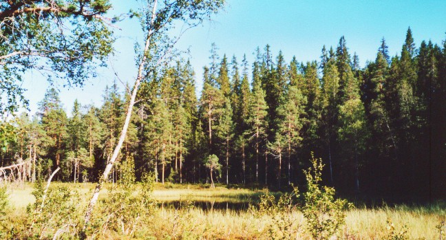 Vildmark in Schweden: Hamra Nationalpark