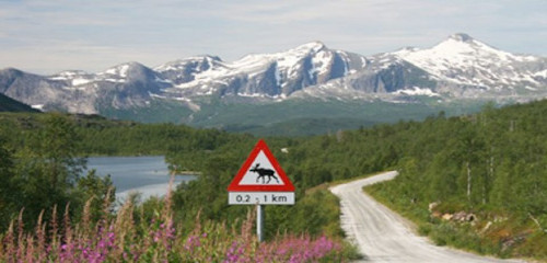 Pauschalreise nach Schweden & Stockholm buchen – 4 Beispiele