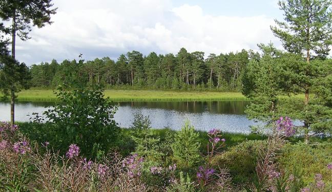 Schwedenbild von Färnebofjärden