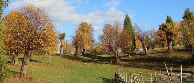 Linköping: Vallaskogen im Herbst