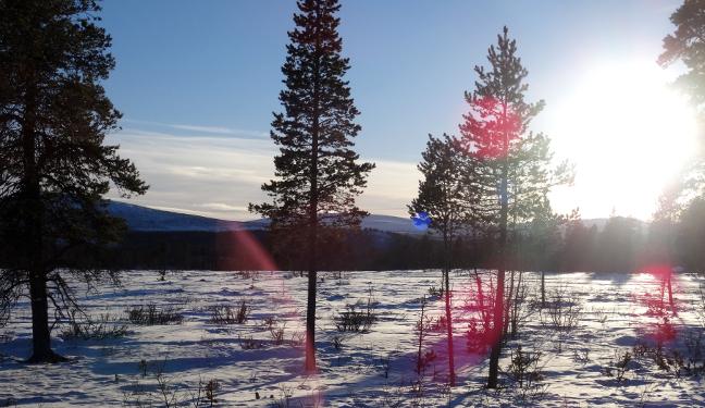 Kiruna Bild: Winterlandschaft