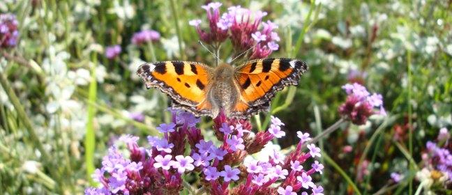 Skandinavischer Garten: Blume mit Schmetterling